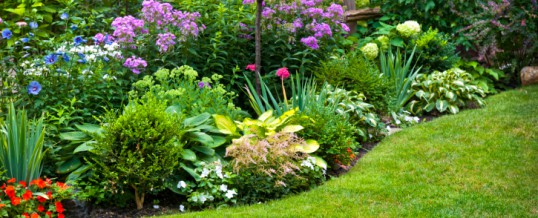 Why Toxic Products Are Popular In Landscaping And Maintenance