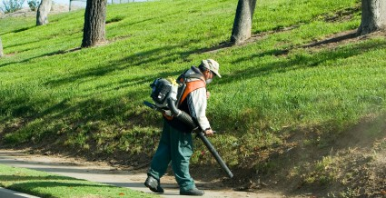 Here Is What To Expect From Good Landscape Maintenance Services