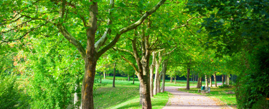 5 Trees that Won't Damage Sidewalks